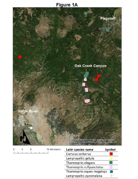 Figure 1A: Northern Arizona locations from which disease (snake fungal disease, snake mites) and bacterial community samples were collected from wild snake species from 2016-2018 by NAU personnel and collaborators. Individual snake species are noted by different colored symbols.