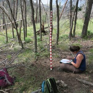 Rachael Wiedmeier collecting vegetation monitoring data in the Jemez Mountains, New Mexico