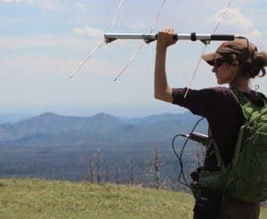 PhD student, Sharon Smythe conducting telemetry for radio-collared elk and mule deer on the Valles Caldera National Preserve, New Mexico