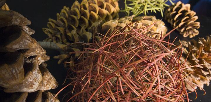 CPBC_Deaver-Herbarium-ek