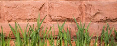 closeup photo of Old Main brick wall focusing on grass blades leaning against the wall