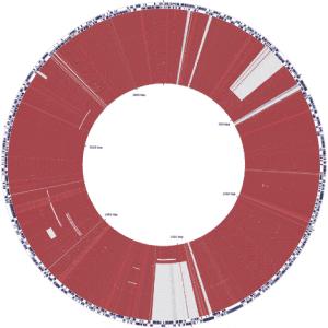 Chromosome Sequence of Burkholderia pseudomallei