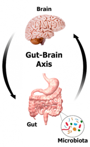 Human Gut Microbiome and the Brain