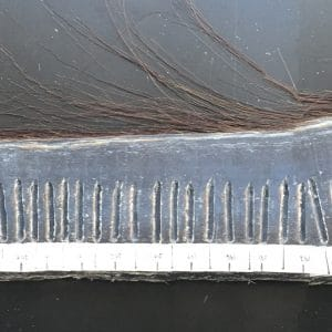 Bowhead baleen plate with measurements