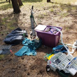 Field station with squirrel under anesthesia